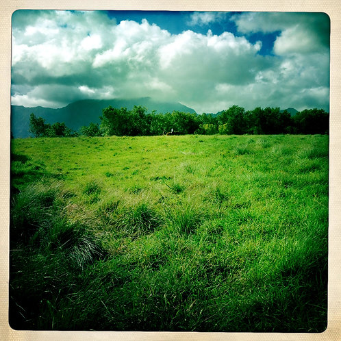 50. 20x20: Across the Field: Kauai,