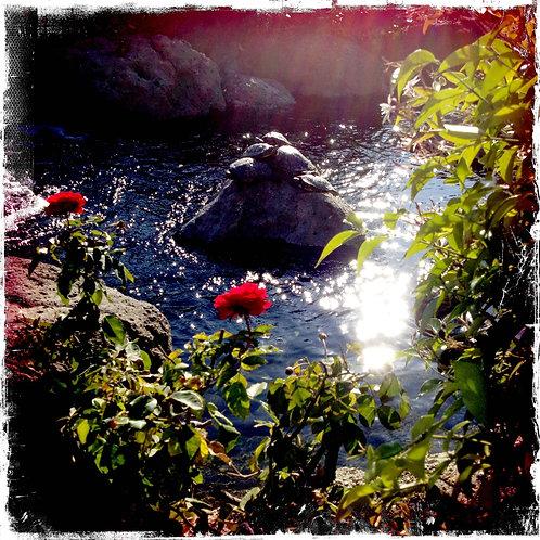 10.12x12:Turtle Love Puddle:Calabasas, CA
