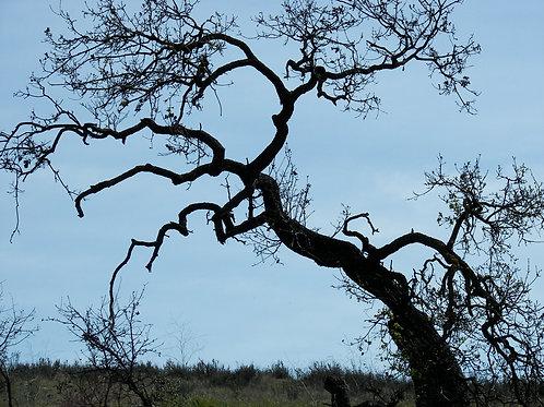 45. 38x38: StoryTree: Lost Hills, CA