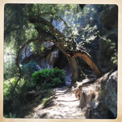 12. 8x8: Path to the Moses Spring: Pinnacles, CA