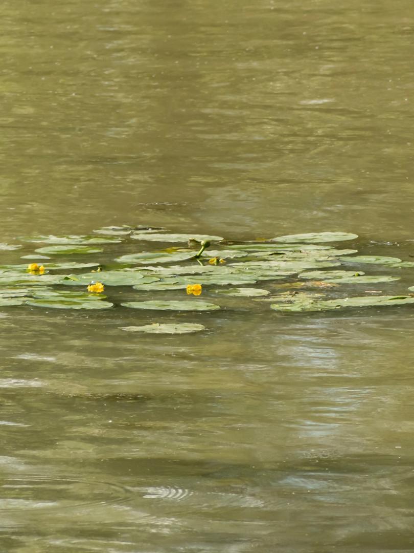 A la manière de Claude Monet