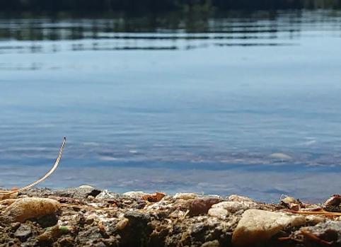Quiet Lake Footage