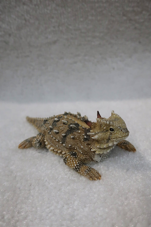 Polyresin Horny Toad Figurine