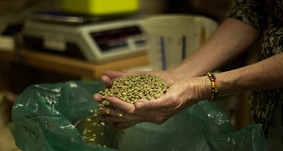 Weighing of the green beans