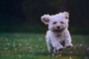 dog happy joe-caione-qO-PIF84Vxg-unsplas