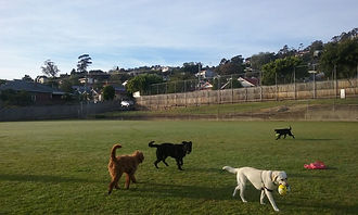 dogs South Hobart Recreatn Ground.jpg