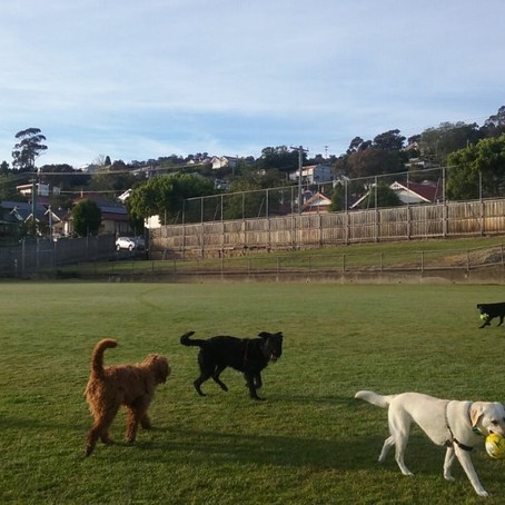 South Hobart dog owners must save their reputation and local parks