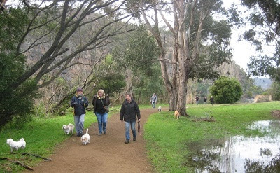 Derwent Valley Dog Walking Association established