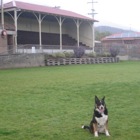 South Hobart dog exercise areas at risk