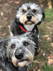 girrabong dogs.jpg