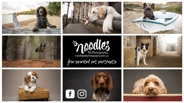Noodles 2019-Promo-Banner-small.jpg