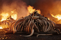 anthropocene-tusk-burn-vr.jpg
