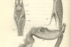 figure-2-catasetum-saccatum.jpg