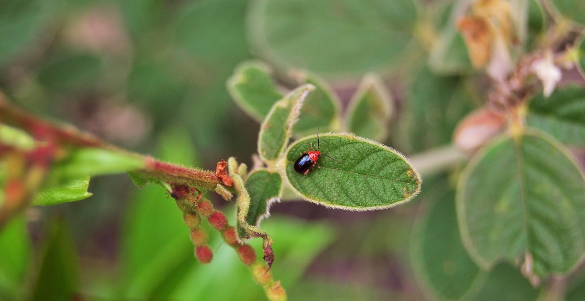 insecto_en_Santa_Sofía.jpg