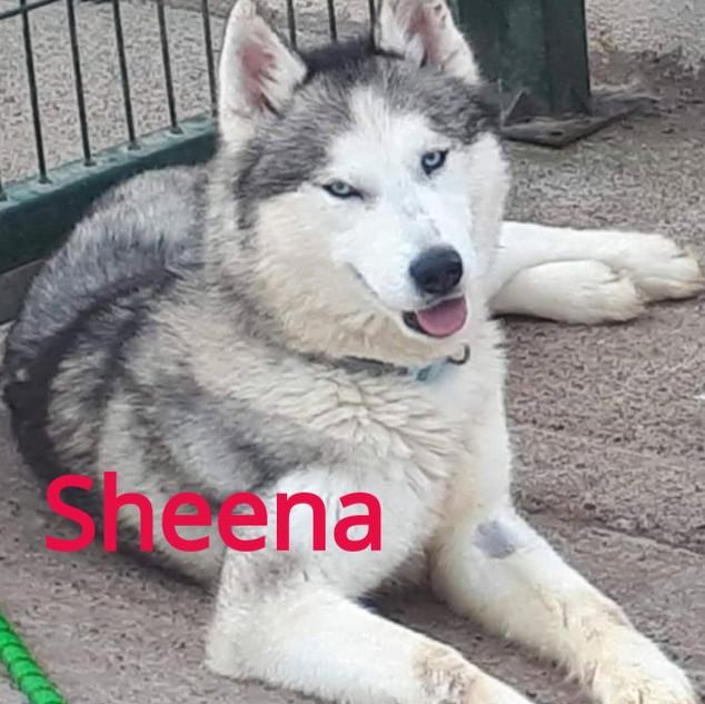Sheena-5_edited.jpg