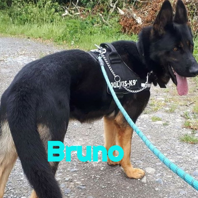 Bruno-2_edited.jpg