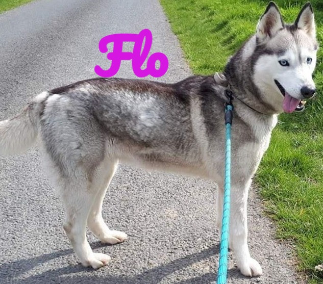 Flo-2_edited.jpg