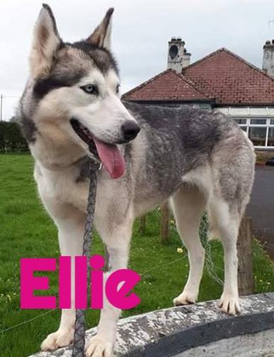 Ellie-3_edited.jpg