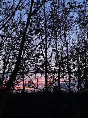 Silhouette of trees with a fluorescent p