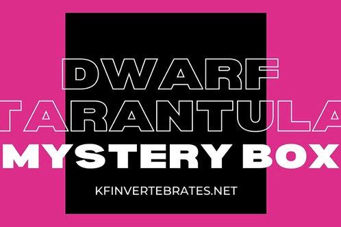 Dwarf Tarantula Mystery box