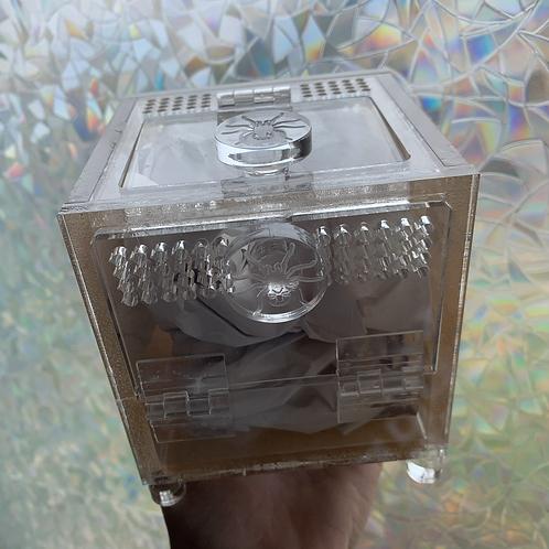 """Tarantula mystery box """"Premium"""""""