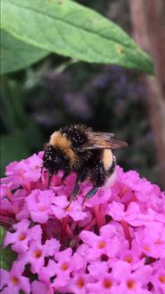 P08   The Bee's Knees