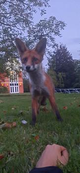 P21 | College Fox