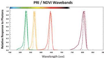 Vegetation-Indices-&-Disease-Monitoring-