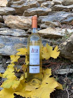 Pinot blanc.jpg