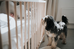 Dog peeking at baby