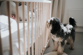 Dog peeking at baby