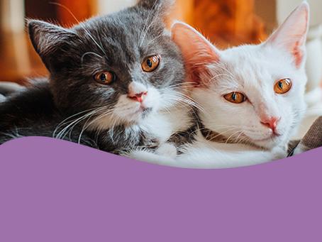 É bom ter mais de um gato na família?