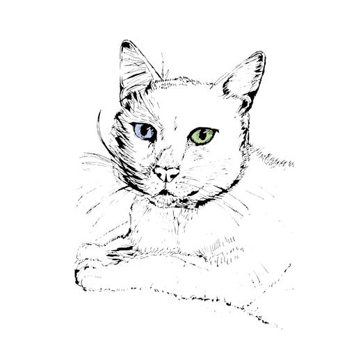 Ilustração Fonfon.png