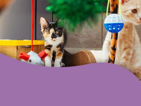 8 dicas básicas para cuidar de um gato filhote