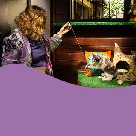 Hotel ou pet sitter: qual serviço é melhor para o gato?