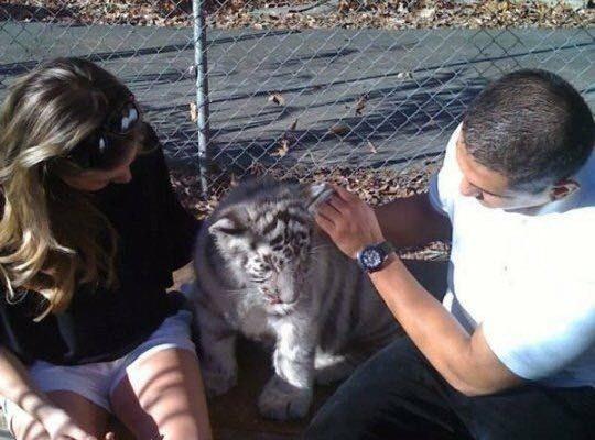 Tiger World, North Carolina, 2009