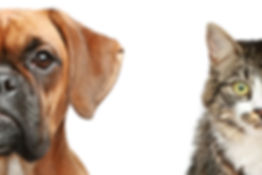 Dogs_shutterstock_69189196.jpg
