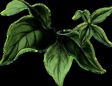 Elysian-Flower-12-pïïp‡0.png