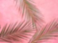 jimena-743930-unsplash.jpg