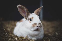 Coco het konijn
