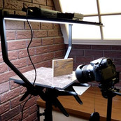 Flea Photography
