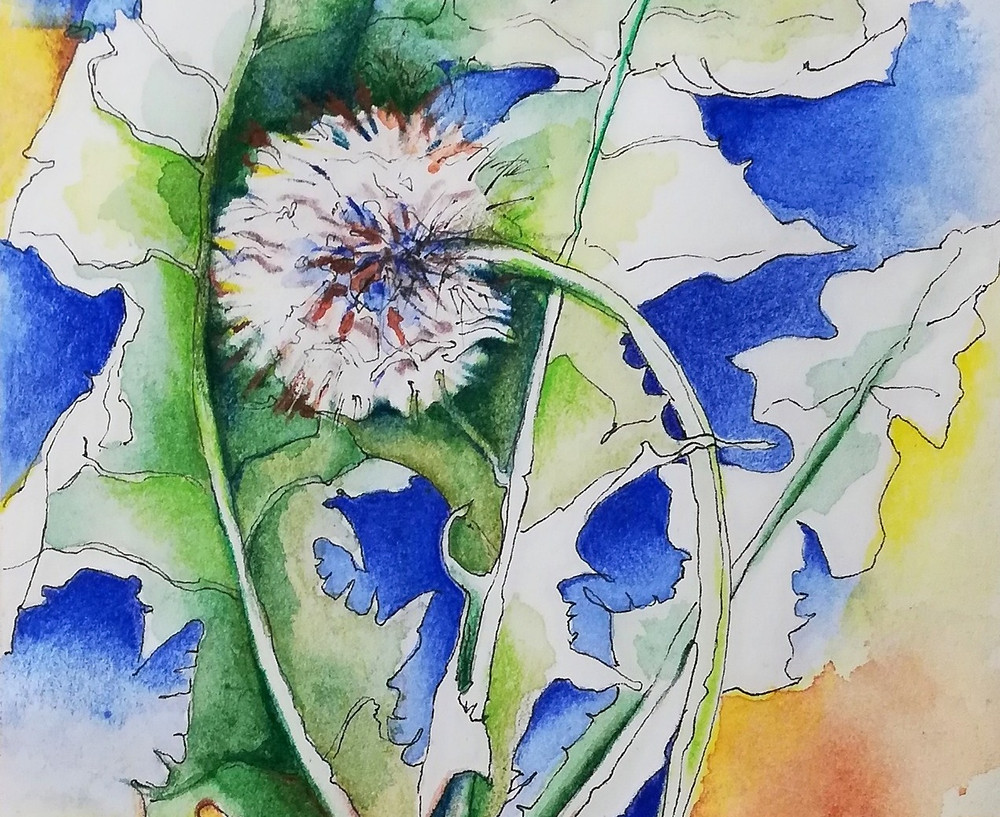 Dandelion Seed, pen and ink with watercolor pencil on paper