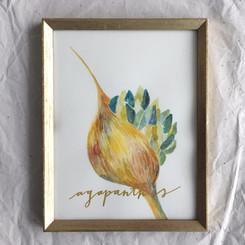 Agapanthus (flower of love)