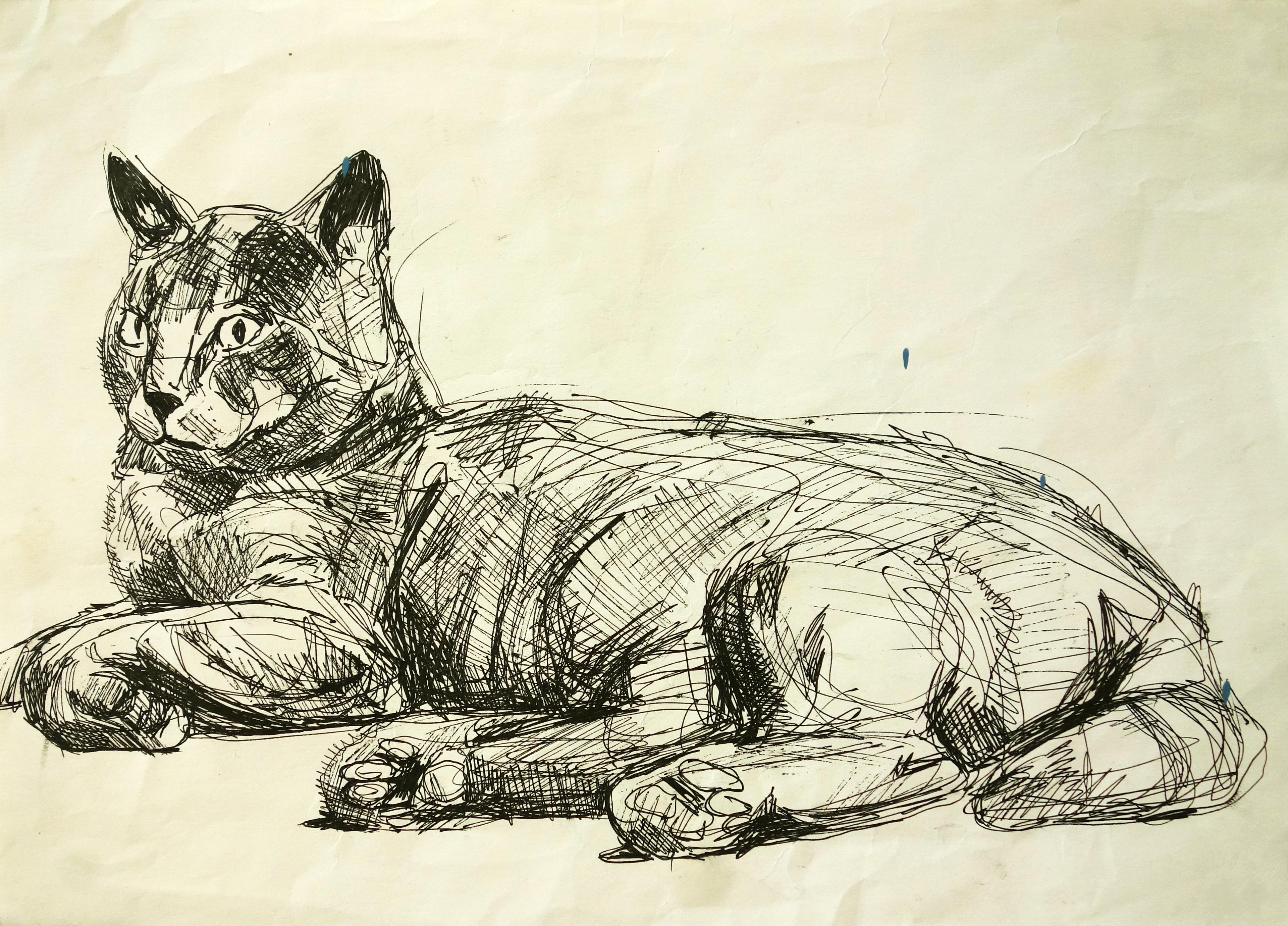 Momo - sketch I