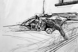 Momo - sketch II