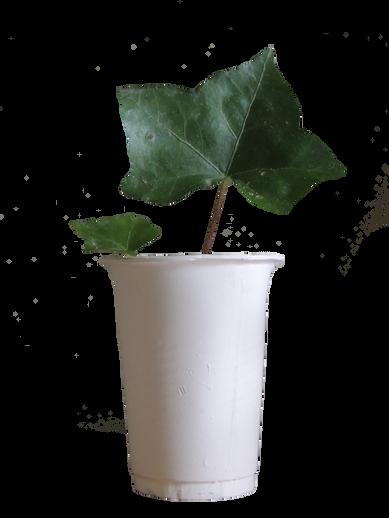 pngplant.png