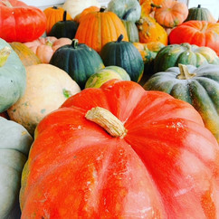 Squash and gourds