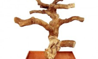 Single Java Tree With Carving