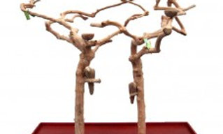 Double Java Tree With Carving