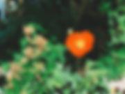 여름의 시작 (2).JPEG